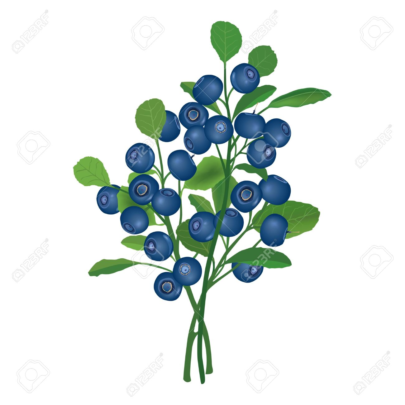 Berry bush clipart.