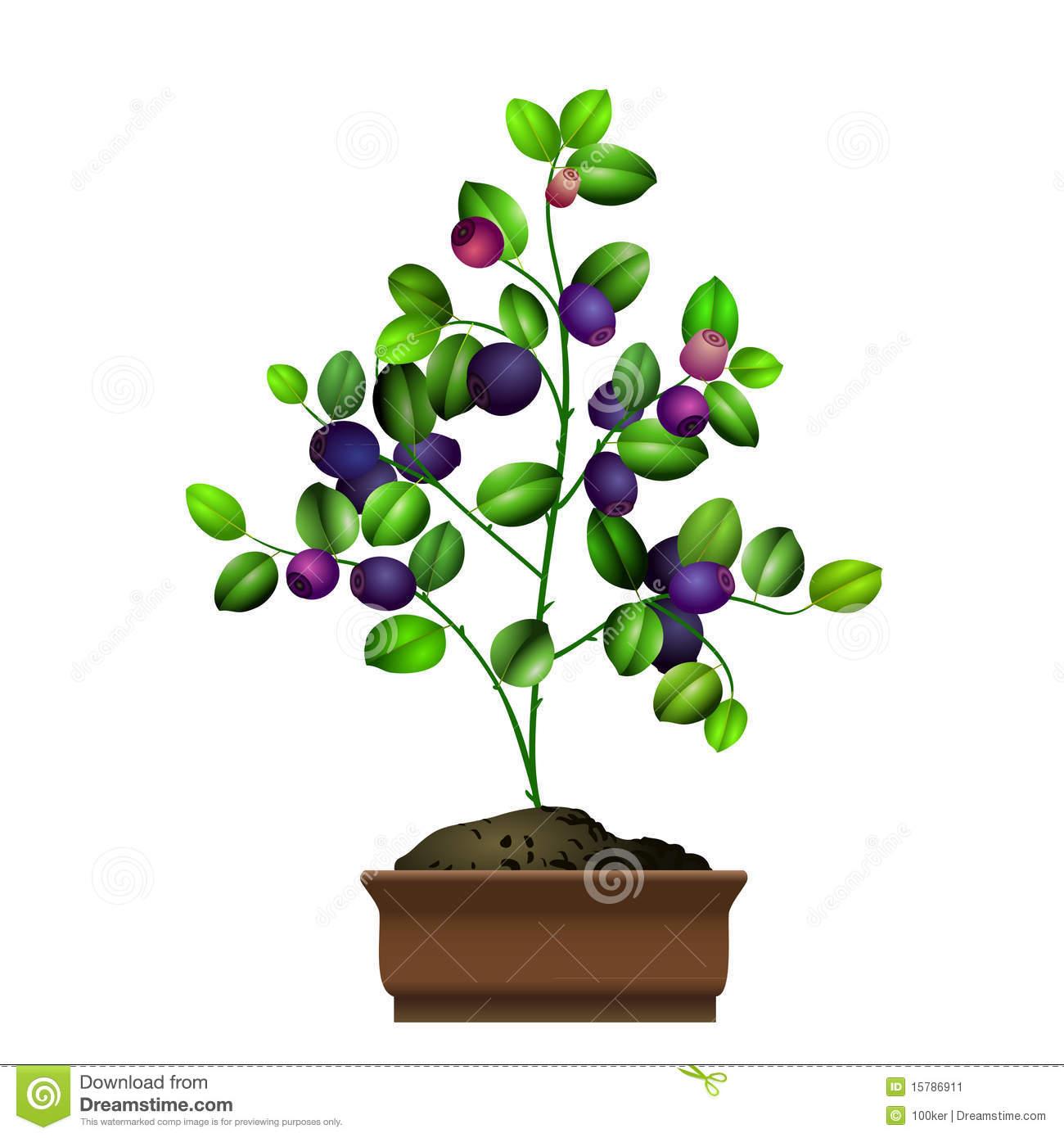 Blueberry bush clipart.