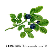 Blueberries Illustrations and Clip Art. 659 blueberries royalty.