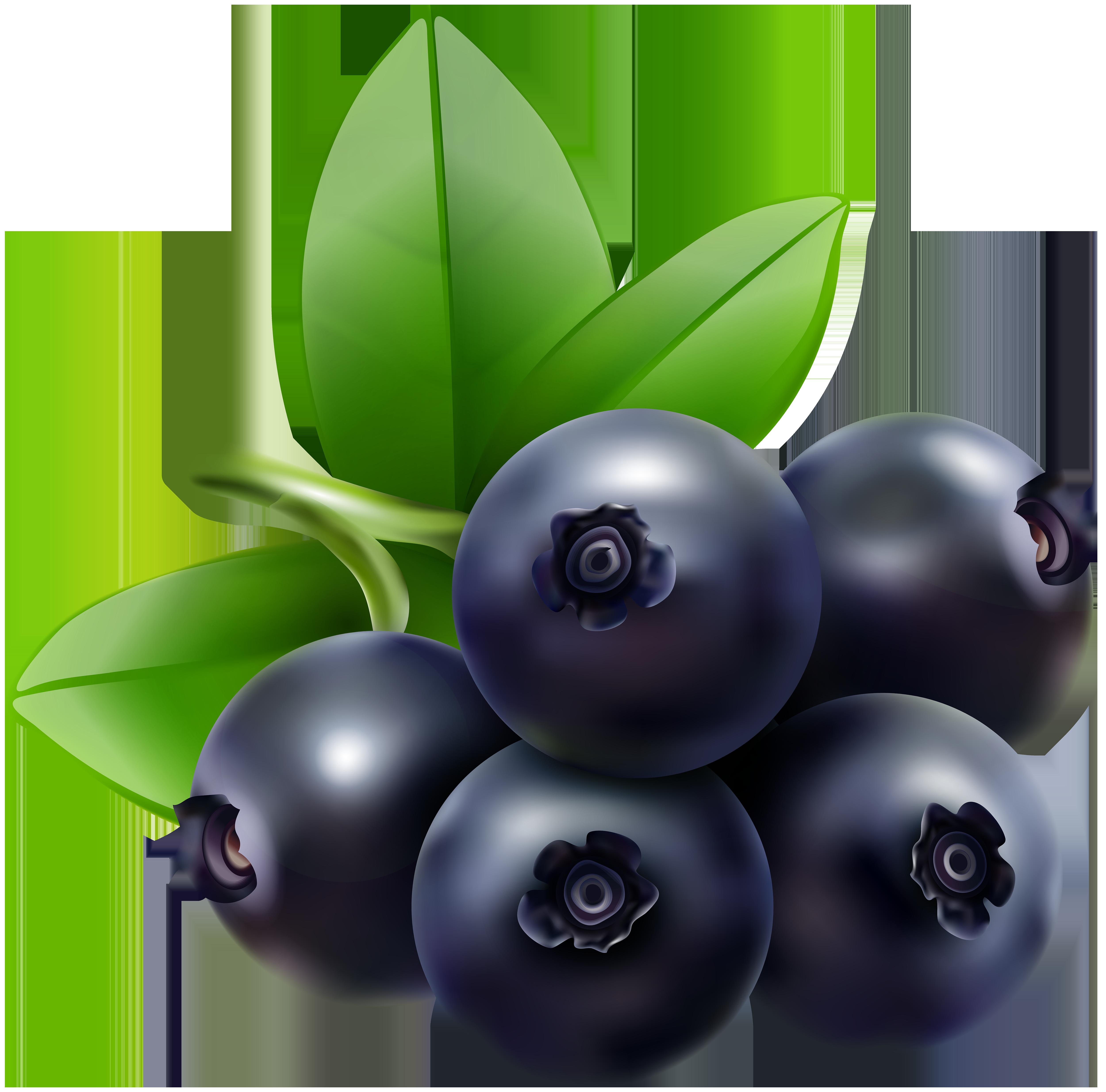 Blueberry Transparent Clip Art Image.