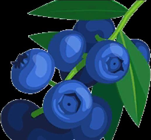 Clipart Of Blueberries , Transparent Cartoon.