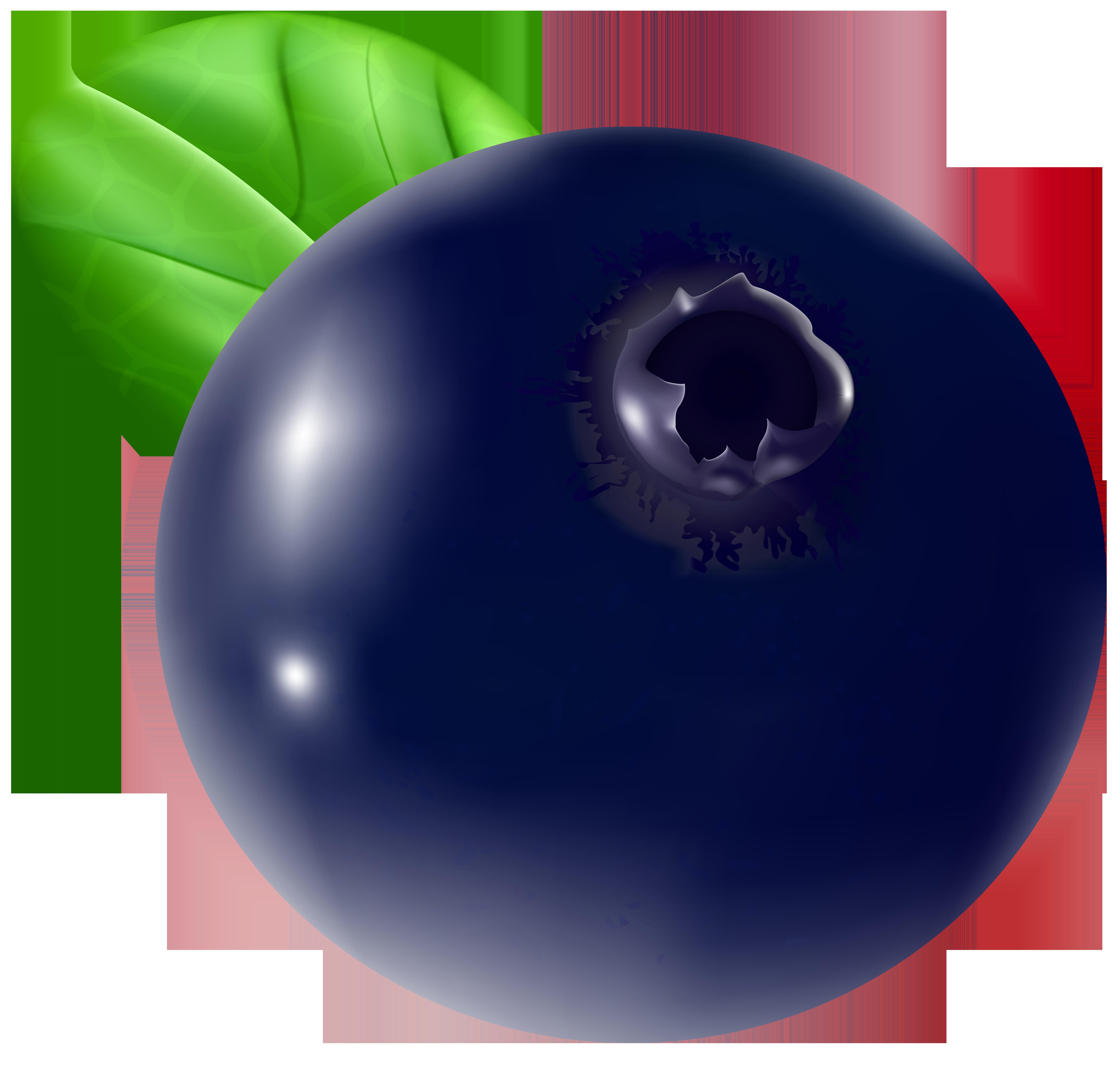 Blueberry Transparent PNG Clip Art Image.
