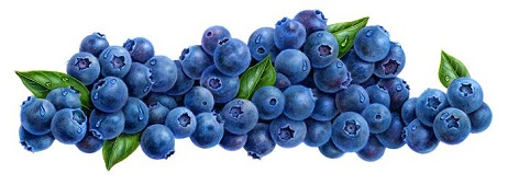 Free Blueberries Cliparts, Download Free Clip Art, Free Clip.