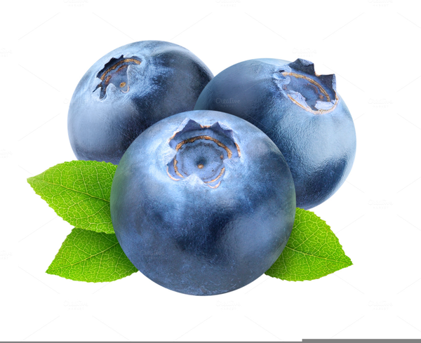 Free Blueberries Clipart.