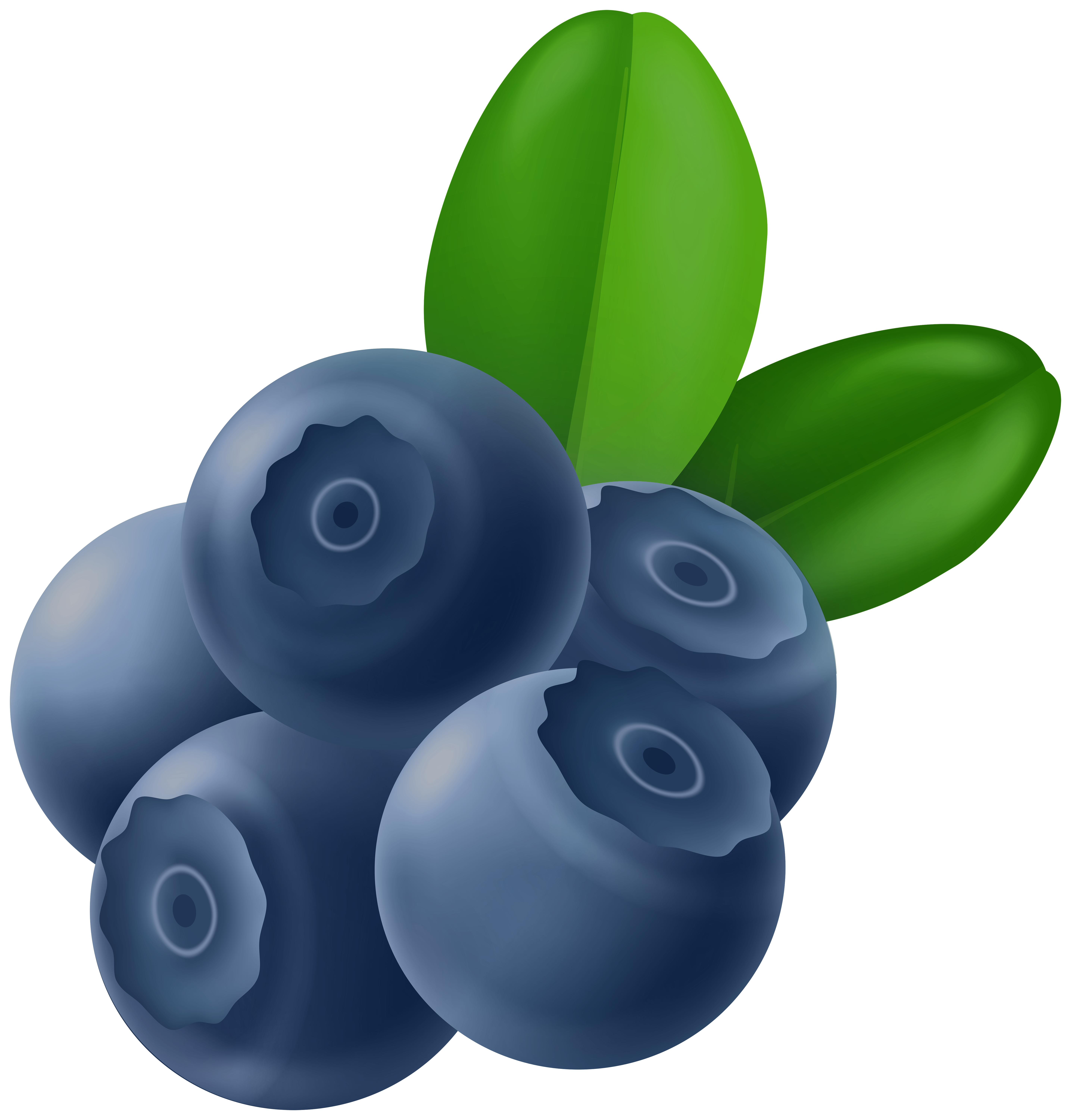 Blueberries PNG Clipart.