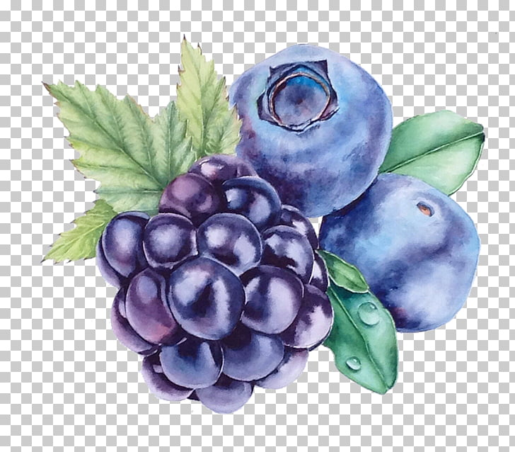 Grape Blueberry Watercolor painting Bilberry, Grape.