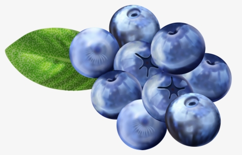 Free Blueberries Clip Art with No Background.