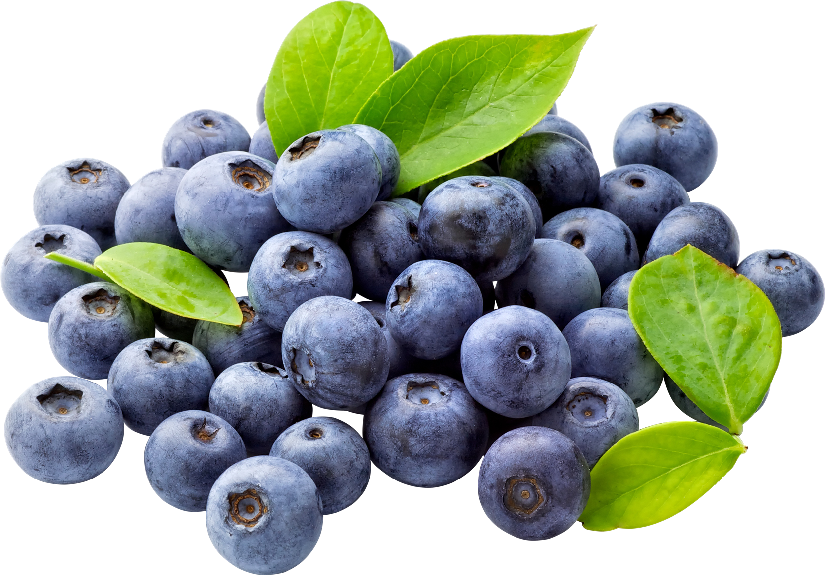 Download Blueberry PNG Free Download For Designing Projects.