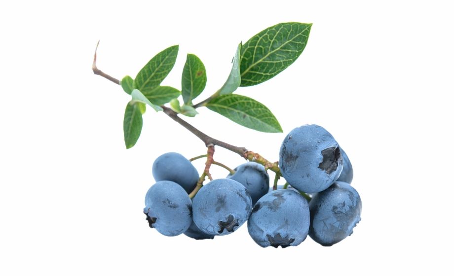 Blueberries Png.