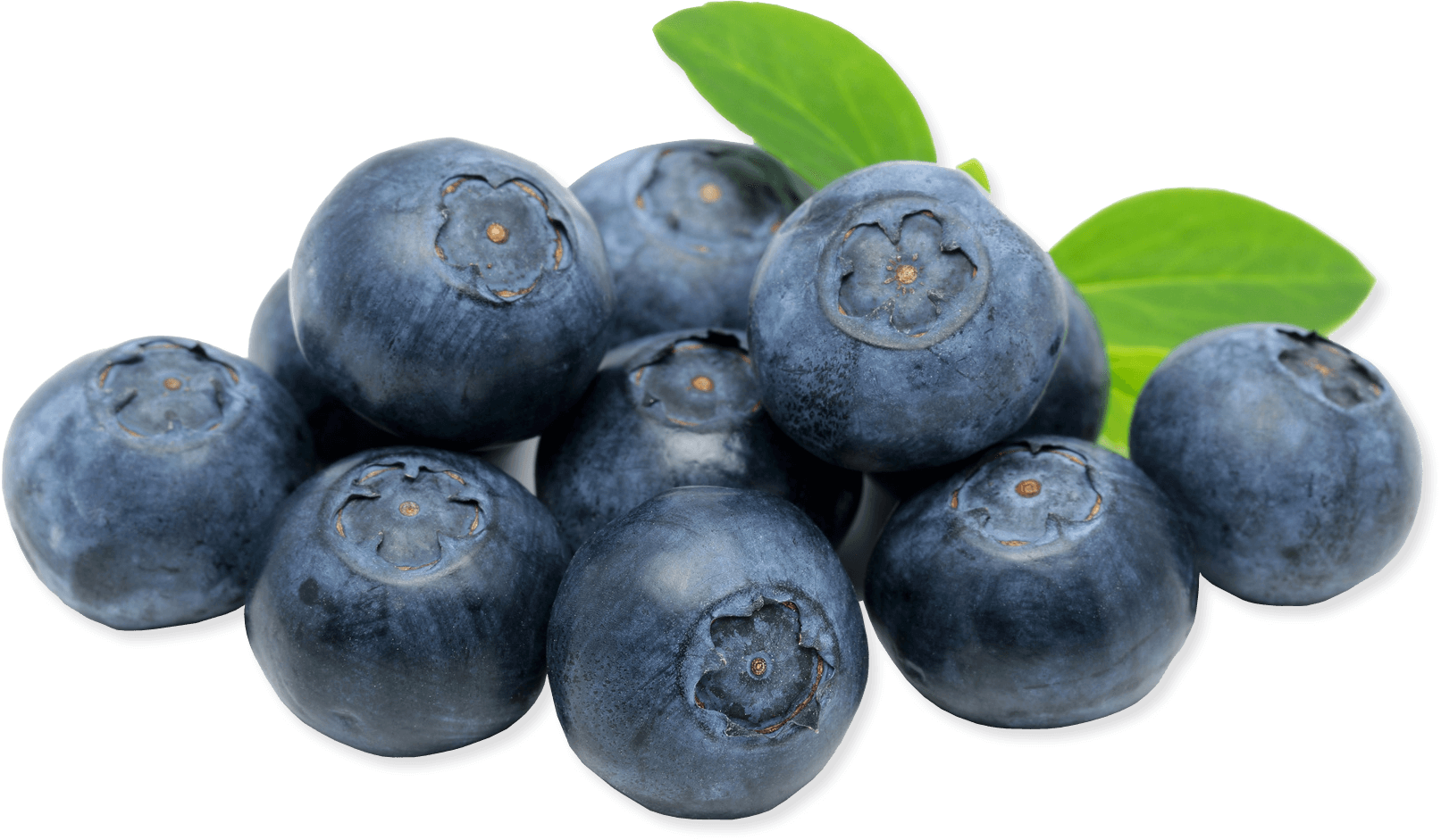 Blueberry PNG Image.