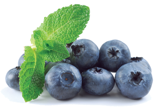 Blueberry PNG Images Transparent Free Download.