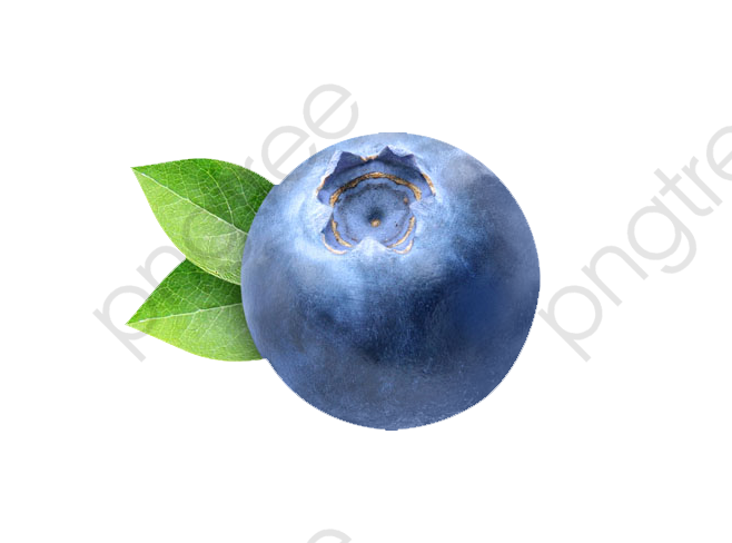 Blueberry, Fruit, Blue PNG Transparent Image and Clipart for Free.