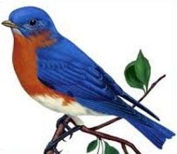 Free Bluebird Clipart.