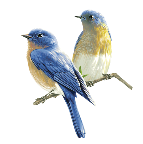 Eastern Bluebird PNG Images.