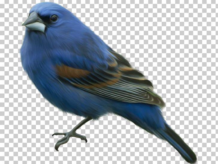 Bird Papua New Guinea PNG, Clipart, Beak, Bird, Birds, Bluebird.