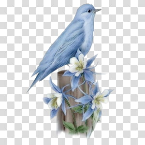 Bluebird transparent background PNG cliparts free download.