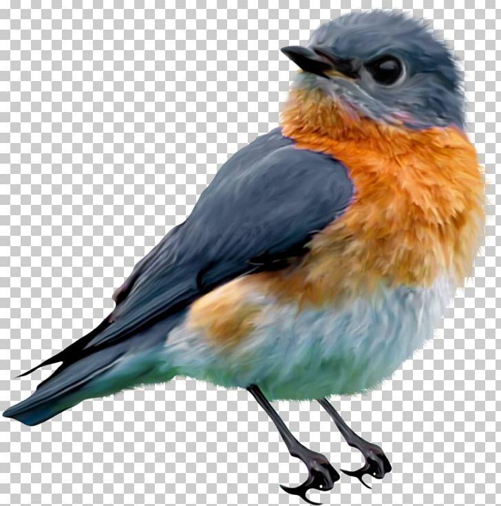Eastern Bluebird PNG, Clipart, Animals, Beak, Bird, Bird Flight.