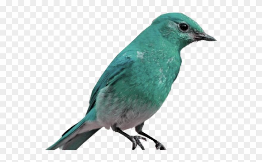 Bluebird Clipart Transparent Background.