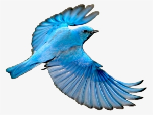 Blue Bird PNG, Transparent Blue Bird PNG Image Free Download.