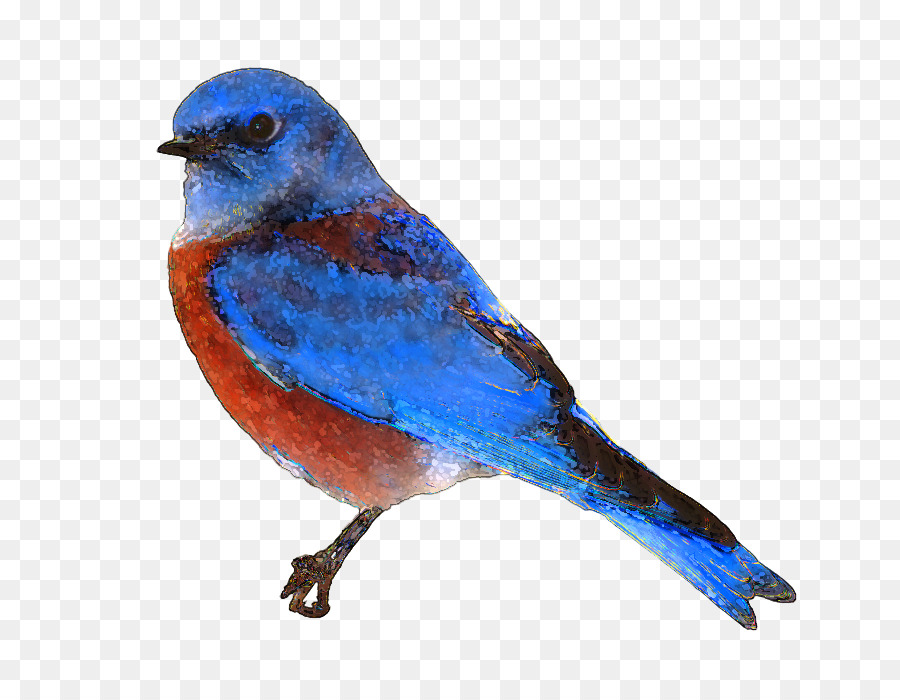 Bird Wingtransparent png image & clipart free download.