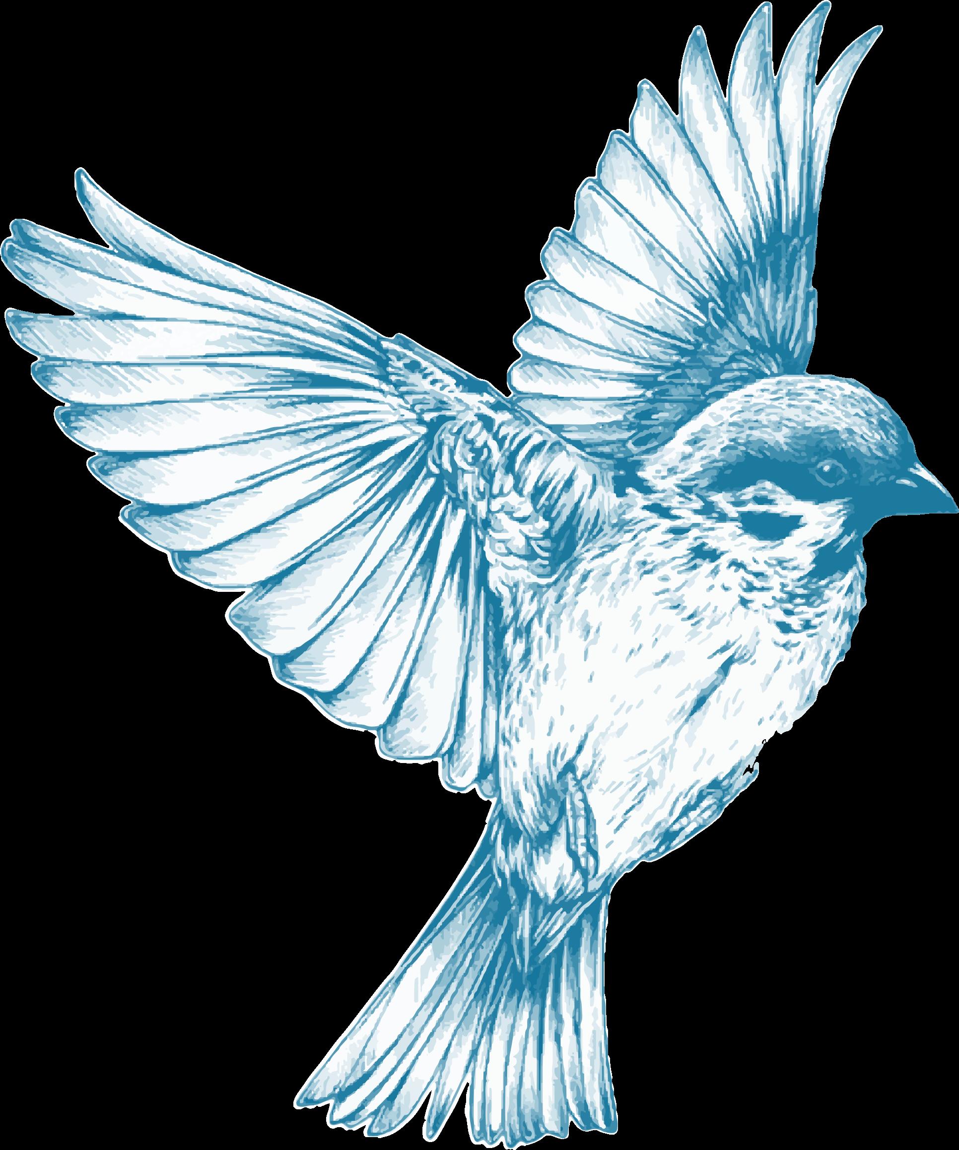 Vintage Blue Bird transparent PNG.