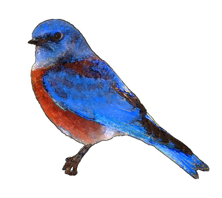 Bluebird Clipart.