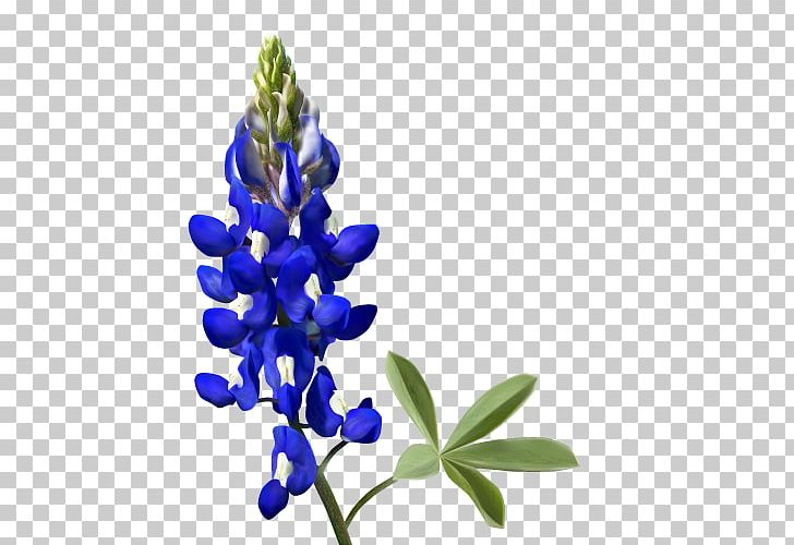 Texas Bluebonnet PNG, Clipart, Art, Bluebonnet, Bluebonnets, Digital.