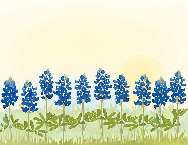 Best Bluebonnet Illustrations, Royalty.