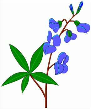 Flower clip art bluebonnet.