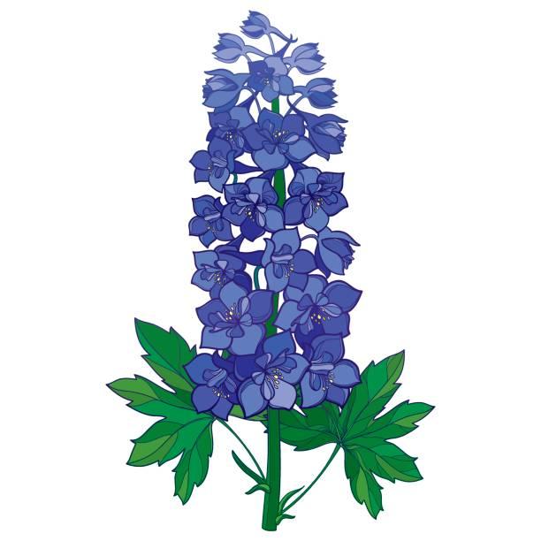 Bluebonnet Flower Drawing.
