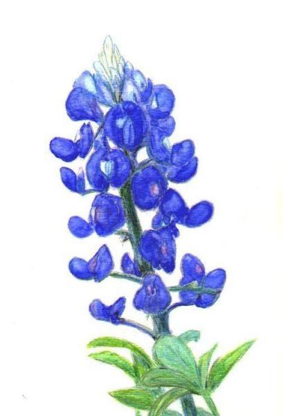 Bluebonnet Clip Art.