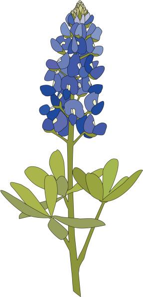 Bluebonnet flower clipart.