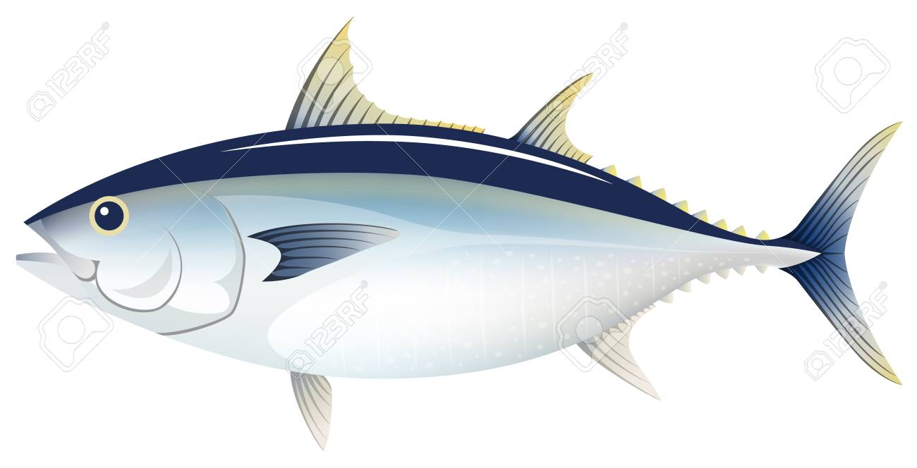 The tuna, isolated on the white background..