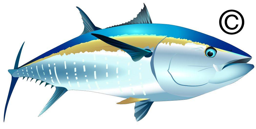 bluefin tuna art.