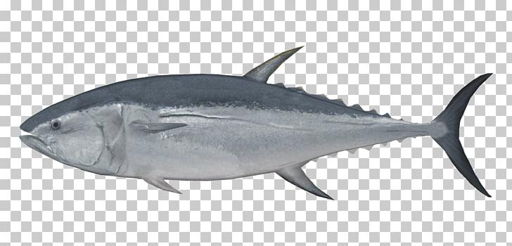 New Zealand Pacific bluefin tuna Albacore Sushi Fish, tuna.
