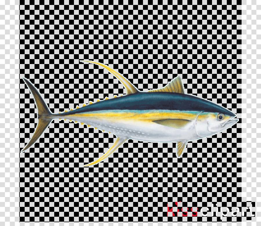 fish fish fin tuna atlantic bluefin tuna clipart.