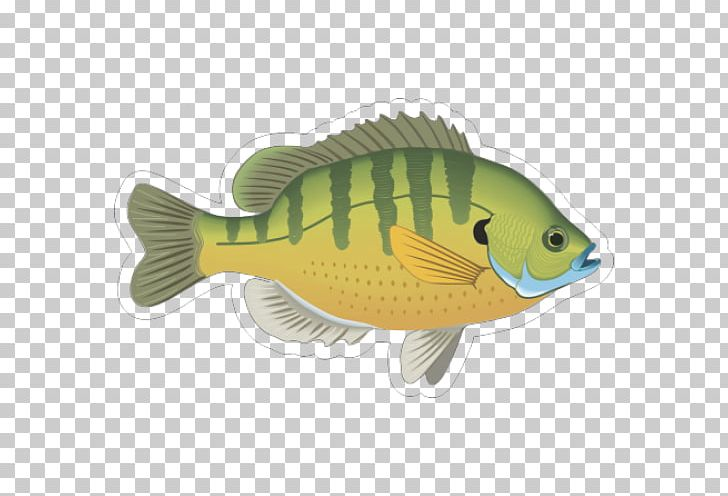 Bluegill Fish Gill Ornamental Fish PNG, Clipart, Animals.