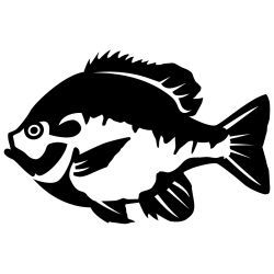 Bluegill 2 Wall Decal.