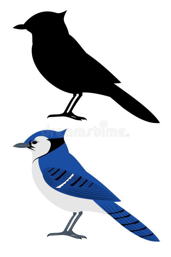 Bluejay Stock Illustrations.