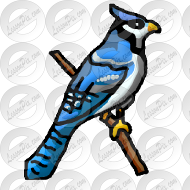 Bluejay Picture for Classroom / Therapy Use.