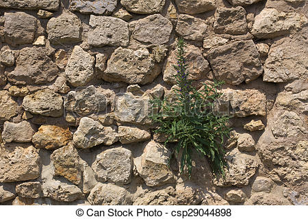 Stock Photographs of Fieldstone Wall With Blueweed.