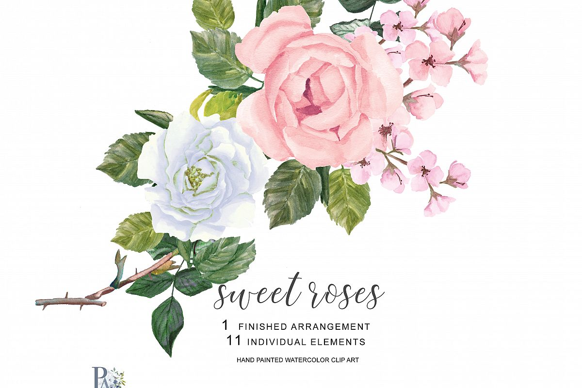 Watercolor Blush Pink and White Roses Clipart Separate Elements Hand  Painted Pink & White Rose Clip Art.