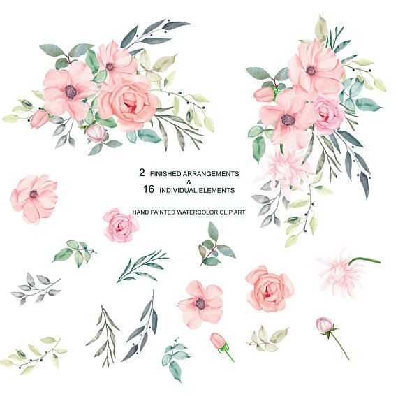 Blush Pink Watercolor Flowers Clipart Separate Elements Rose.