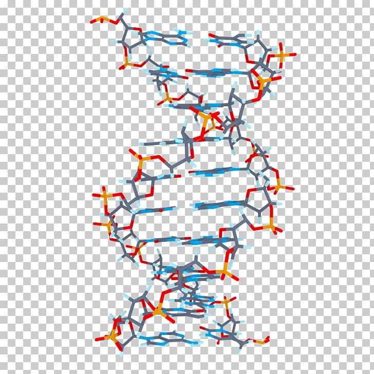 BMP file format mod_ssl , DNA PNG clipart.