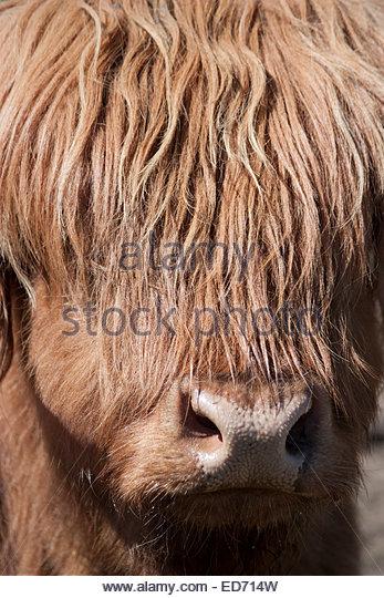Animal Bo Stock Photos & Animal Bo Stock Images.