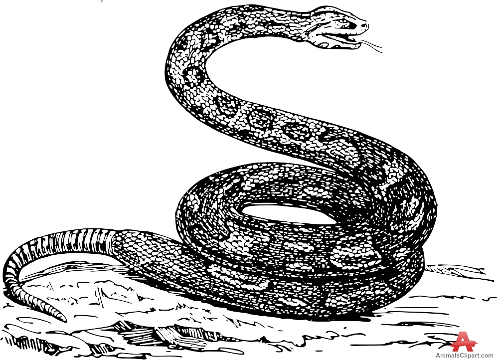 Large Boa Constrictor Snake Drawing Clipart.