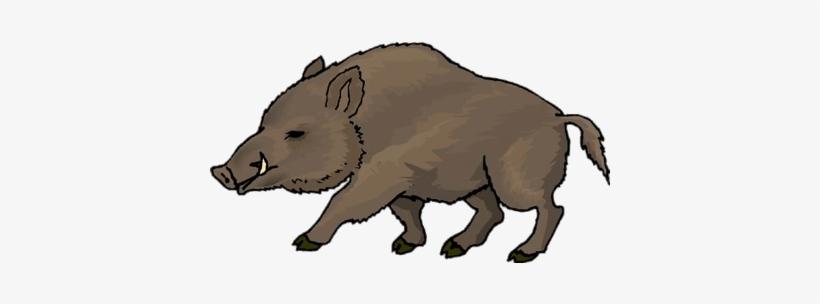 Wild Boar Drawing.