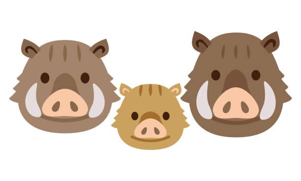 Best Wild Boar Illustrations, Royalty.