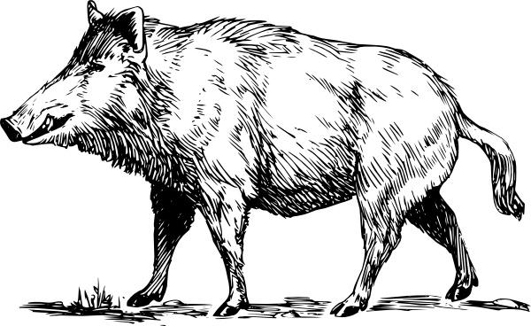 Boar clip art Free vector in Open office drawing svg ( .svg.
