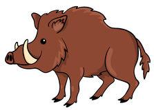 Cartoon Hog Pictures.